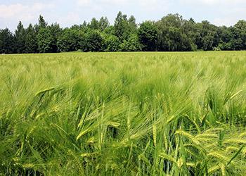 odkup zemědělských pozemků