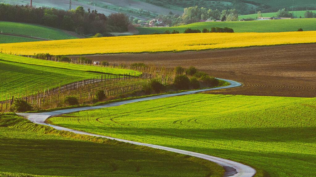 pacht zemědělského pozemku